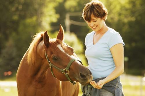 A caballo regalado no le mires el diente